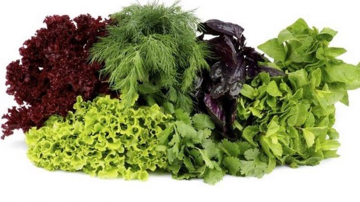 Folhas verdes são ótimos para dietas de emagrecimento